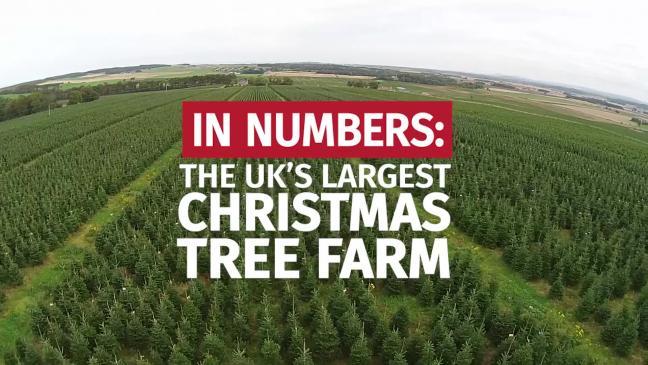 Waitrose Christmas Tree